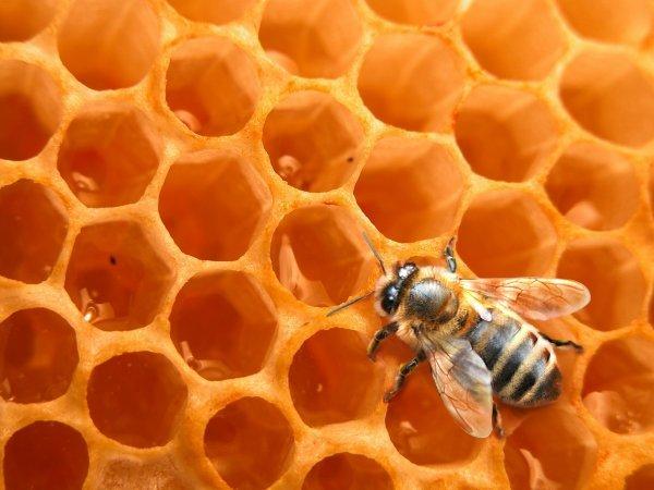 abeilles disparition envi2bio. Black Bedroom Furniture Sets. Home Design Ideas