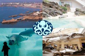 biarritz oc an agrandissement du mus e de la mer envi2bio. Black Bedroom Furniture Sets. Home Design Ideas