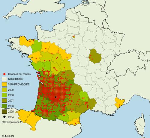 Danger : Le frelon asiatique tueur ne cesse d'agrandir son territoire en France (2/5)