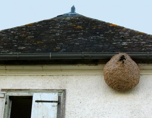 Danger : Le frelon asiatique tueur ne cesse d'agrandir son territoire en France (4/5)
