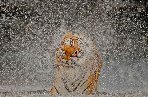 © Ashley Vincent:National Geographic Photo Contest)
